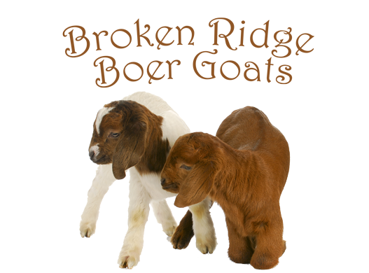 Broken Ridge Boer Goats
